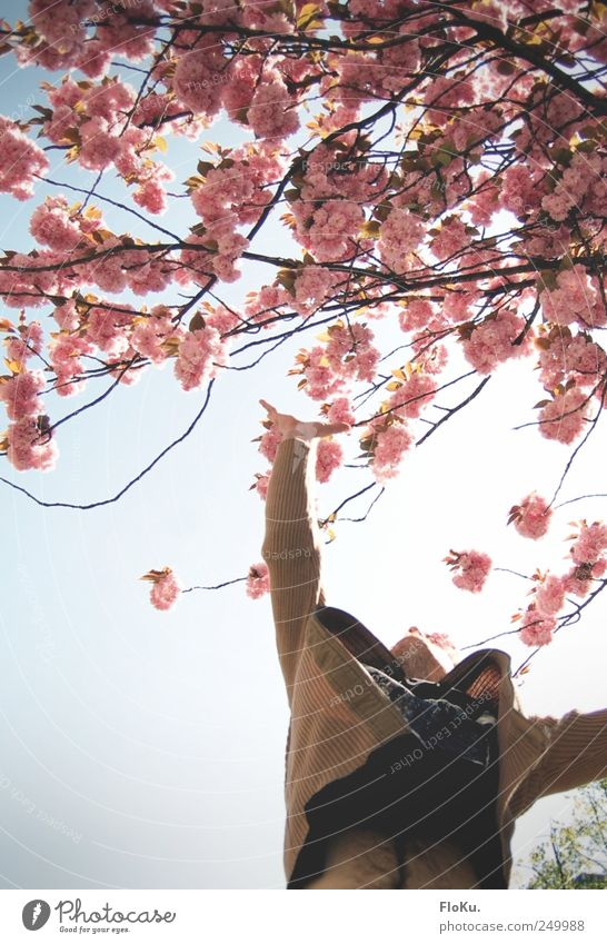 If the stars are not... Human being Masculine Arm Stomach 1 Nature Plant Beautiful weather Tree Blossom Blossoming Jump Blue Pink White Joy Happy Happiness