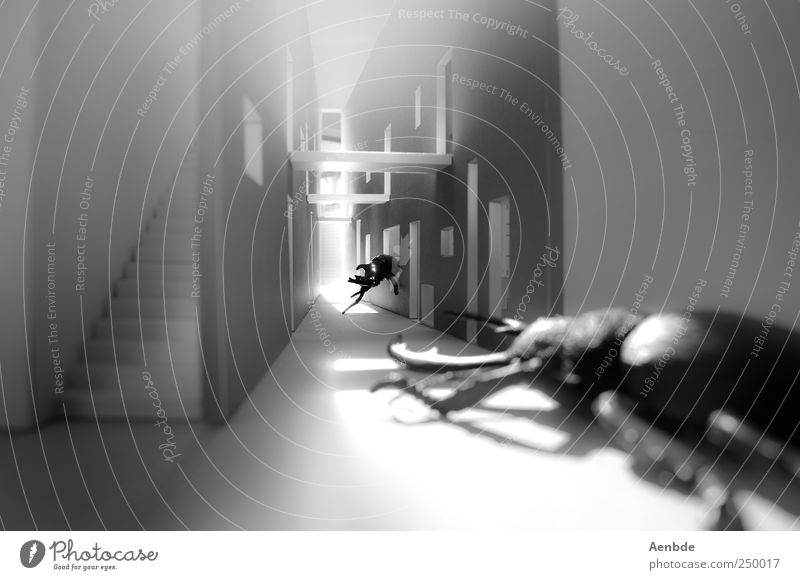 The duel Animal Beetle 2 Fight Threat Disgust Creepy Cold Near Dream Kafkaesque Miniature Model Passage Insect Nightmare Black & white photo Interior shot