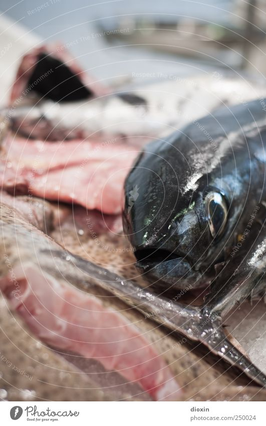 fish-head Food Fish Nutrition Fishery Fish market Fish mouth Animal Fish eyes Tail fluke Delicious Natural Protein Fresh Colour photo Interior shot Close-up