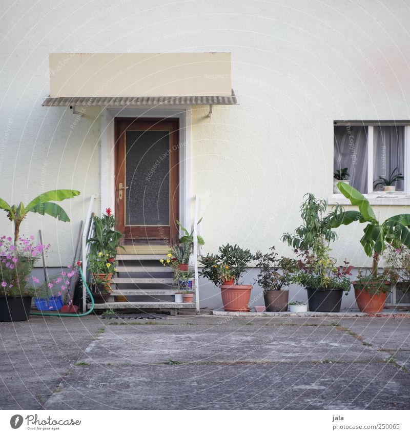 Beautiful Plant Flower House (Residential Structure) Window Wall (building) Wall (barrier) Building Door Facade Places Stairs Manmade structures Courtyard Foliage plant Environment