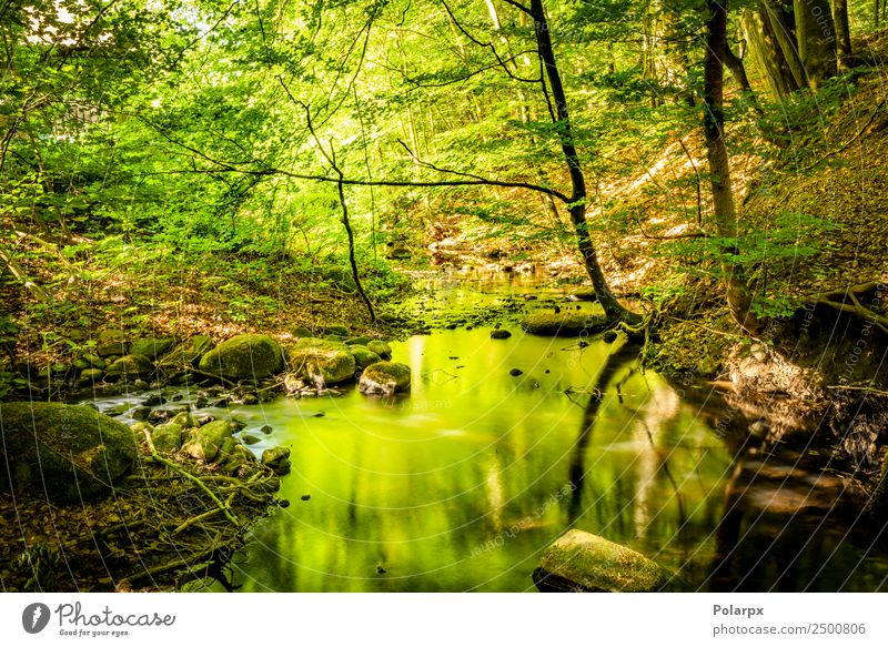 Green forest in the summer reflecting colors in a rive Nature Vacation & Travel Summer Plant Beautiful Sun Landscape Tree Leaf Forest Mountain Environment