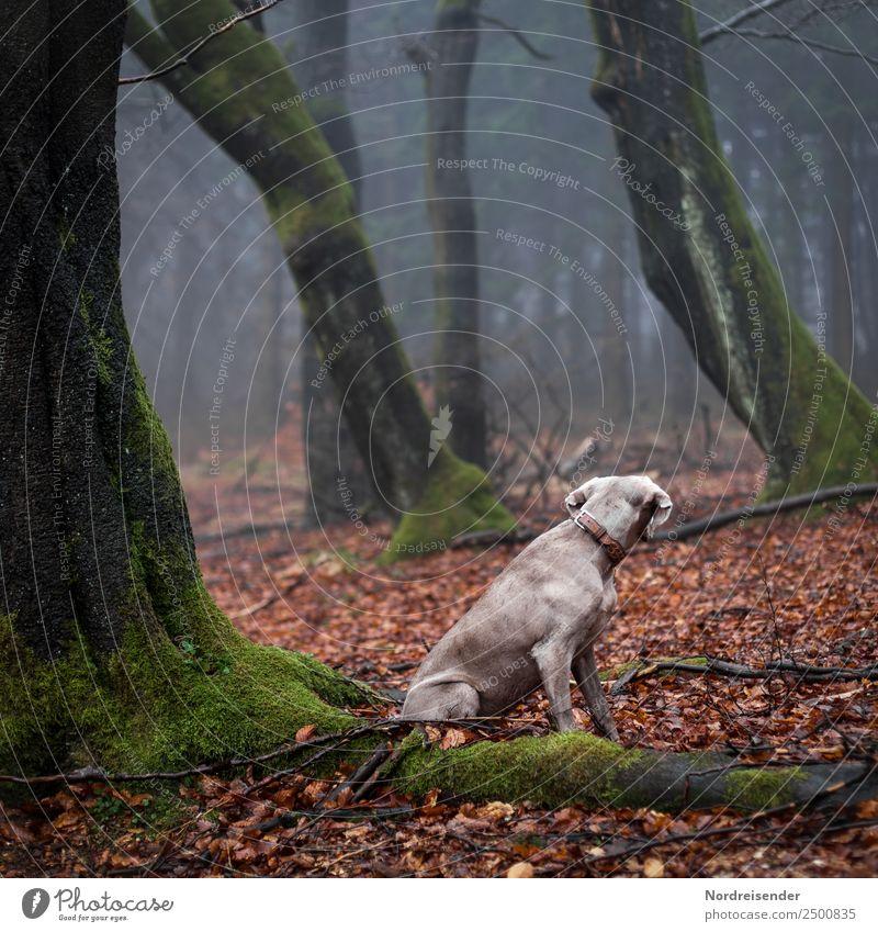 Thriller instinct. Nature Landscape Elements Autumn Fog Rain Tree Forest Virgin forest Animal Pet Dog 1 Observe Wait Safety Secrecy Love of animals