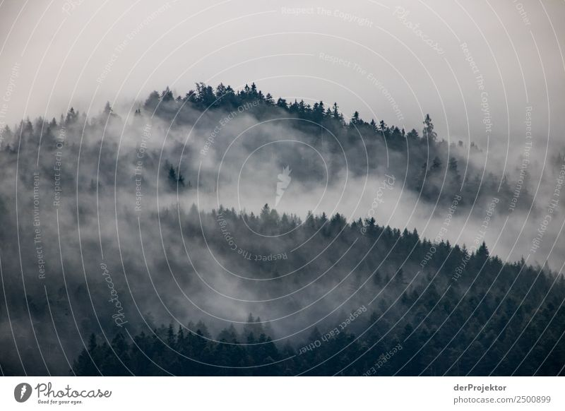 Wafts of mist decorate a spruce forest Vacation & Travel Tourism Trip Adventure Far-off places Freedom Expedition Mountain Hiking Environment Nature Landscape