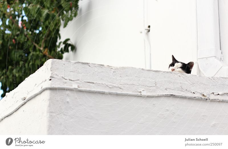 On the wall in ambush Animal Cat 1 Stone Observe White Colour photo Exterior shot Shallow depth of field Animal portrait Looking into the camera Forward