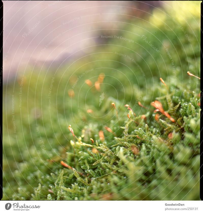 Nature Beautiful Plant Environment Authentic Simple Many Moss