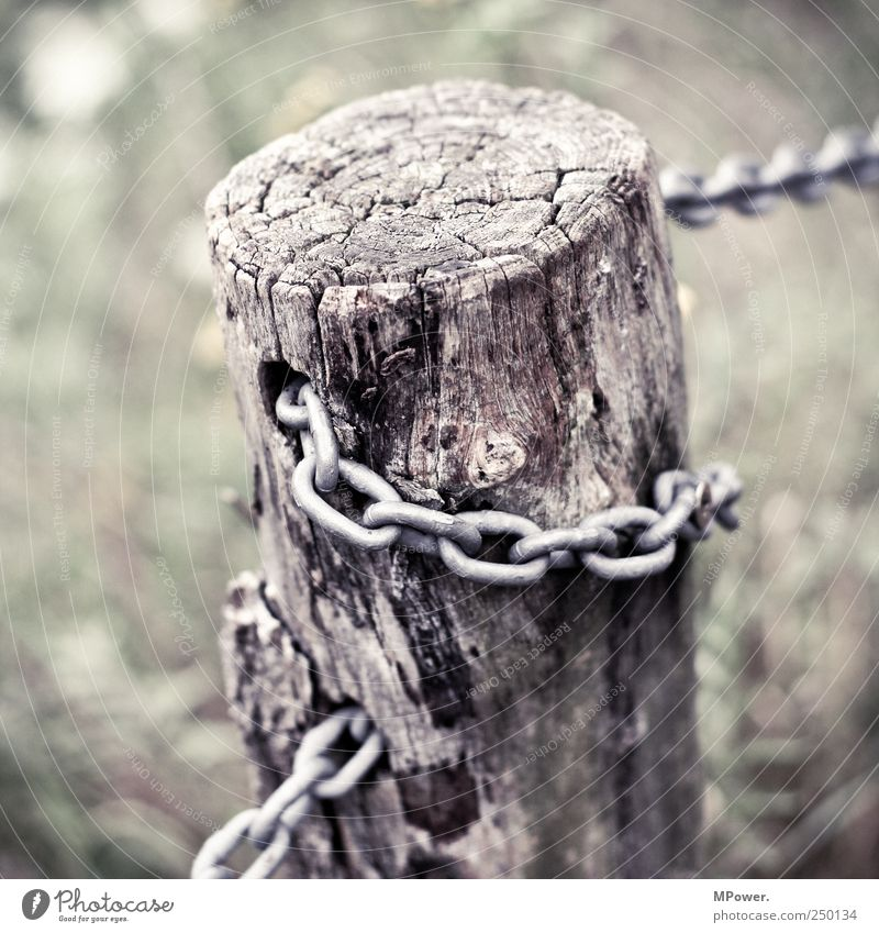concatenation Wood Attachment Tree trunk Chain Iron Brittle Connectedness Wooden stake Fence Fence post Chain link Annual ring Old Tree bark Square Branch