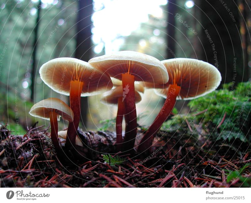 Plant Forest Lamp Brown Floor covering Mushroom Depth of field