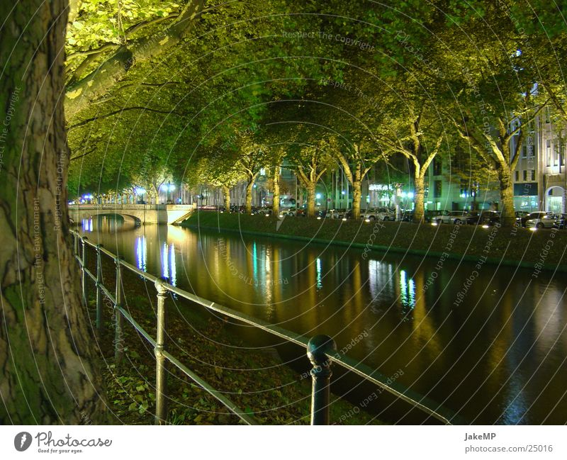 Light play in Düsseldorf Tree Modern Water lithesome Coast Evening Nature Duesseldorf Night