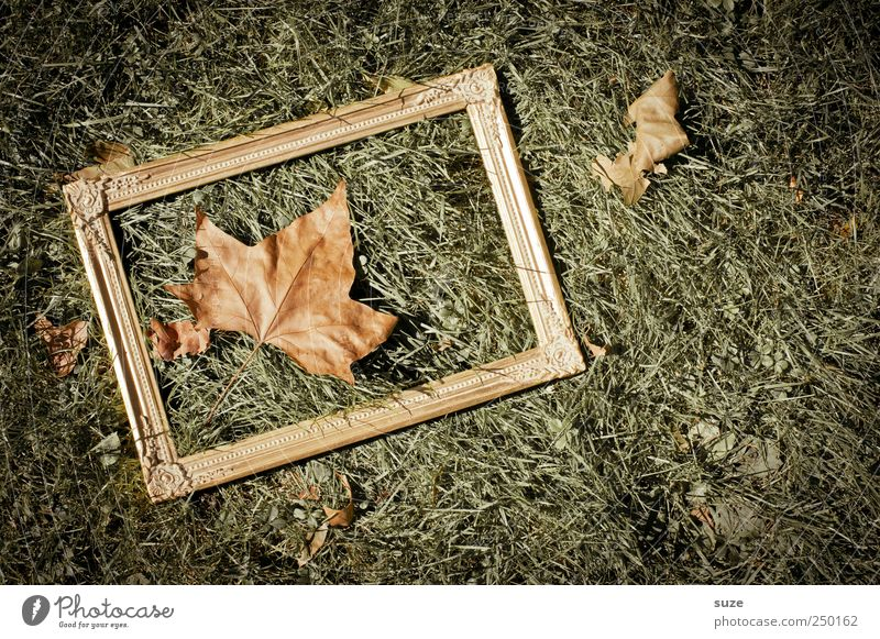 maple-leaf-picture-frame-white Environment Nature Autumn Beautiful weather Leaf Meadow Exceptional Natural Gold Green Autumn leaves Ground Picture frame Frame