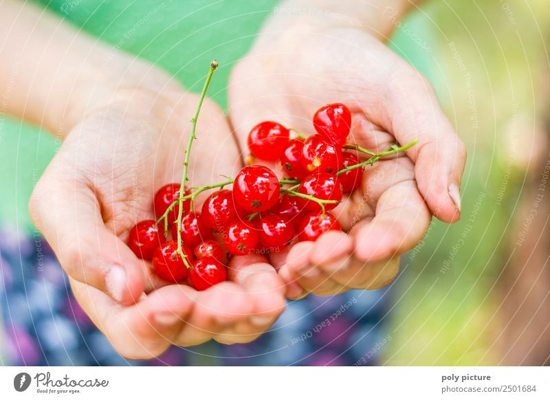 Children's hand holding fresh currants Girl Boy (child) Infancy Youth (Young adults) Life Hand Fingers 3 - 8 years 8 - 13 years Environment Nature Landscape