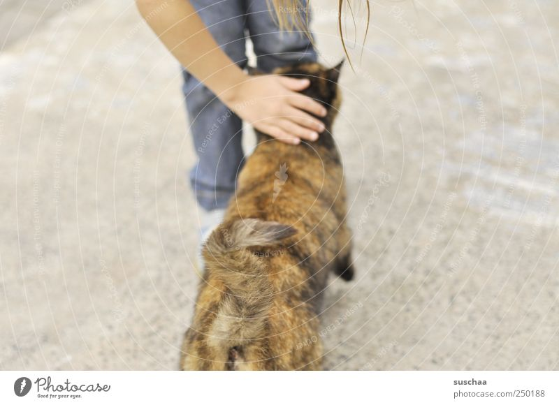 katzenklo resp. katzenpo .. Child Girl Infancy Arm Hand Legs 1 Human being 3 - 8 years Animal Pet Cat Touch Brown Love of animals Caress Tails Pelt Colour photo