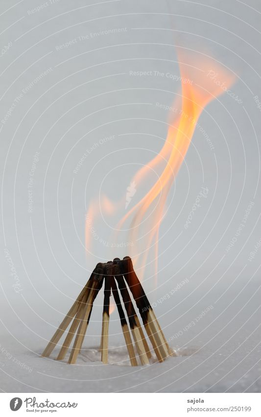 Wood Blaze Fire Stand Team Transience Hot Advice Crowd of people Burn Society Attachment Teamwork Flame Match Fireplace