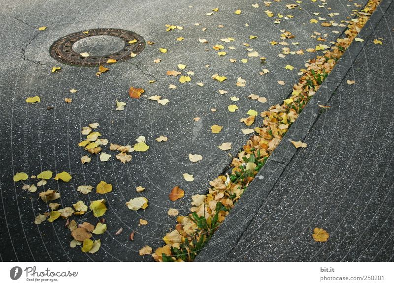 399 days... Environment Autumn Climate Street Lanes & trails Illuminate Lie To dry up conceit chill Yellow Gold Gray Moody Autumn leaves Autumnal Early fall