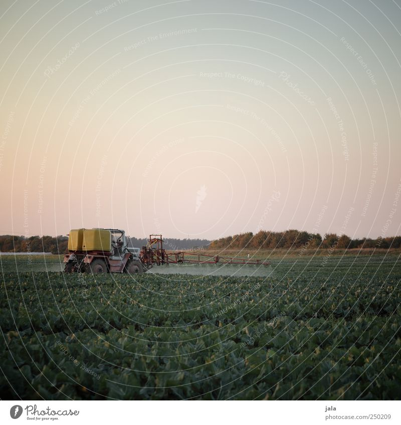 Sky Nature Plant Autumn Environment Landscape Work and employment Field Natural Driving Agriculture Forestry Tractor Foliage plant Agricultural crop