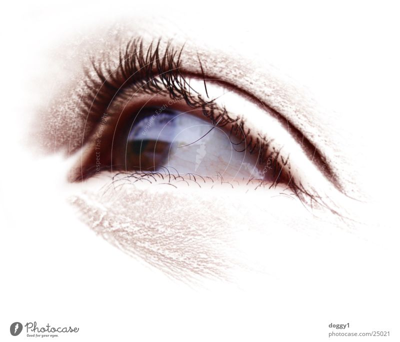 Woman White Eyes Bright Perspective Eyelash Pupil