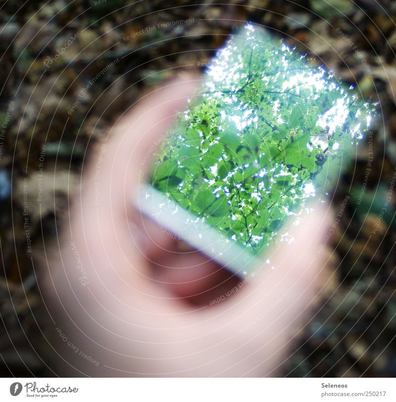 Nature Hand Tree Plant Summer Leaf Forest Environment Park Fingers Perspective Mirror Environmental protection Reflection