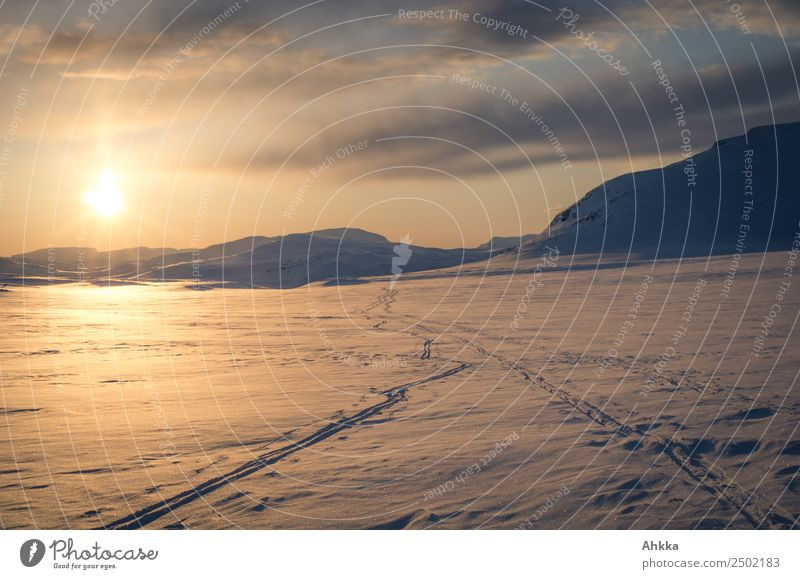 Sunset in polar space, lonely ski tracks Calm Adventure Far-off places Freedom Expedition Winter Winter vacation Winter sports Landscape Elements Sky Ice Frost