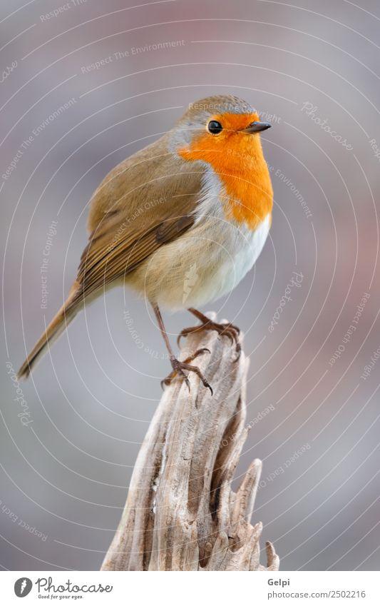 Pretty bird Nature Man Beautiful White Animal Adults Life Environment Natural Wood Small Bird Gray Brown Wild Europe