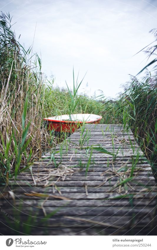Nature Green White Red Summer Leisure and hobbies Trip Bushes Common Reed Lakeside Footbridge Rowboat Overgrown