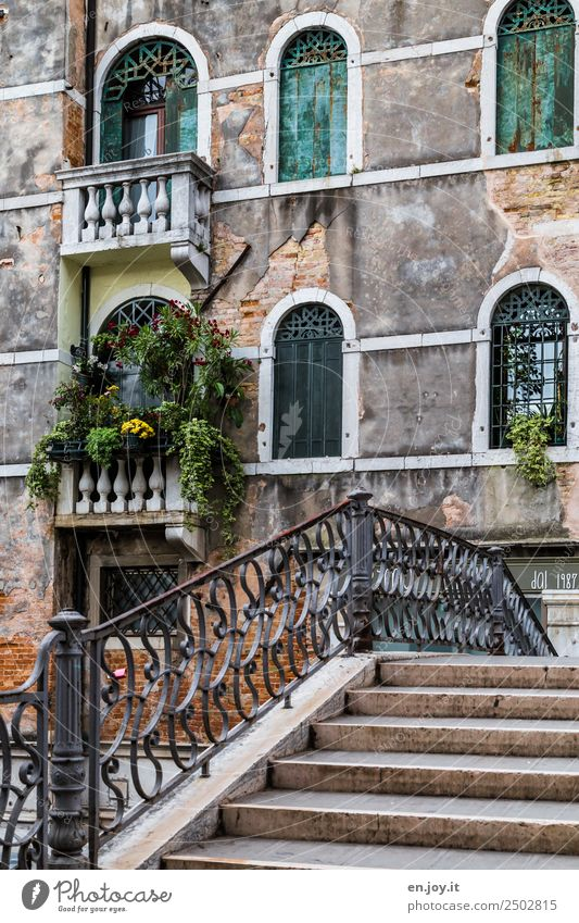 Romantic Vacation & Travel Sightseeing City trip Summer vacation Pot plant Venice Italy Europe Town Old town Bridge Wall (barrier) Wall (building) Stairs Facade