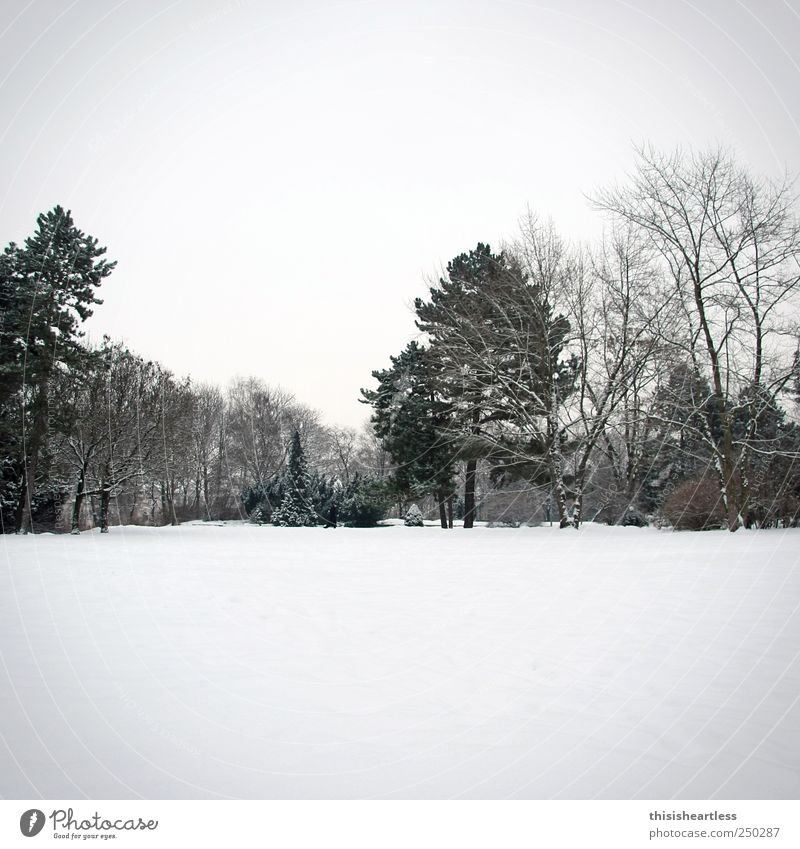 Sky Nature White Tree Loneliness Landscape Winter Black Meadow Lanes & trails Snow Gray Freedom Horizon Park Bushes