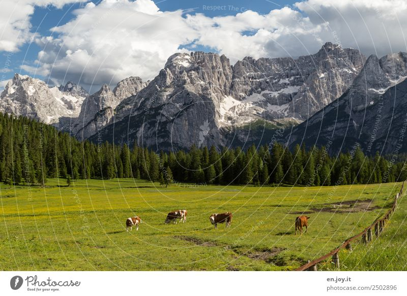 Nature Vacation & Travel Summer Green Landscape Relaxation Animal Clouds Forest Mountain Healthy Environment Spring Meadow Rock Trip
