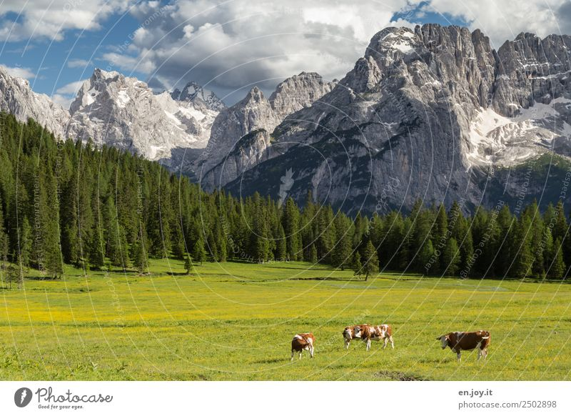 suckingly happy Vacation & Travel Summer vacation Mountain Nature Landscape Clouds Spring Beautiful weather Meadow Forest Rock Alps Dolomites Peak Italy