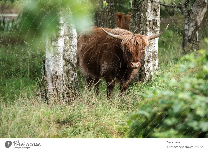 Nature Vacation & Travel Summer Plant Animal Forest Environment Natural Tourism Trip Park Adventure Beautiful weather Cow Animal face Antlers