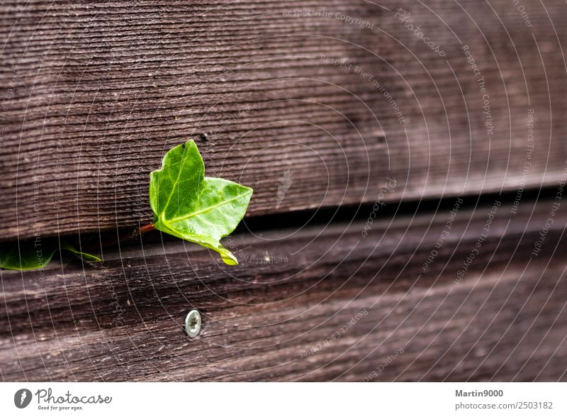 Life - Happiness Happy Spring Leaf Foliage plant Sign Sharp-edged Success Brash Uniqueness Curiosity Strong Brown Green Emotions Joie de vivre (Vitality)