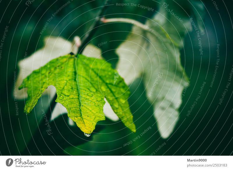 MINDFULNESS Nature Animal Autumn Rain Leaf Foliage plant Compassion To console Grief Death Sadness Colour photo Subdued colour Exterior shot Copy Space right