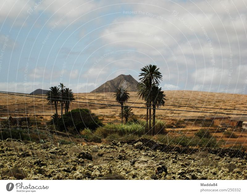 lonely mountain Vacation & Travel Far-off places Summer Environment Nature Landscape Plant Earth Sky Clouds Beautiful weather Drought Tree Palm tree Field