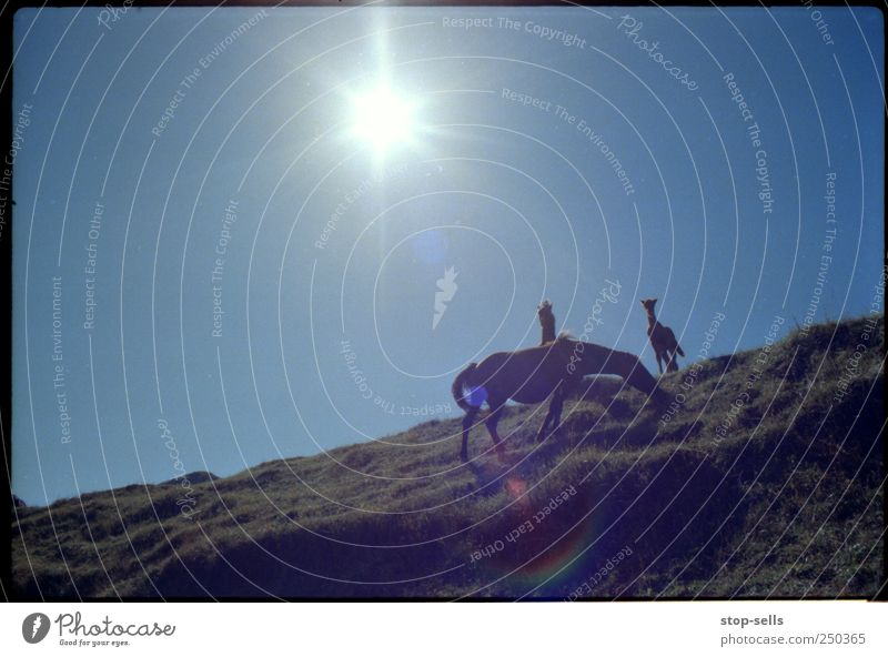 Sky Nature Plant Sun Animal Freedom Mountain Environment Landscape Grass Warmth Air Earth Wild animal Horse Authentic