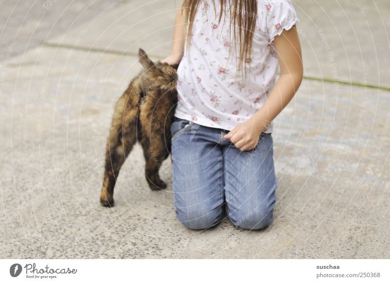Cat Human being Child Hand Girl Animal Hair and hairstyles Infancy Concrete T-shirt Jeans Touch Pet Sympathy Love of animals 3 - 8 years