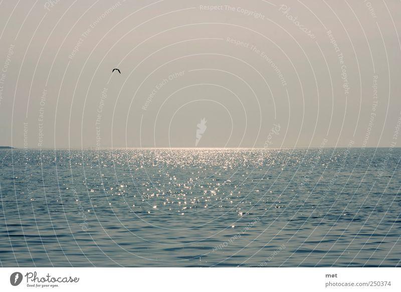I want sea Nature Landscape Water Cloudless sky Baltic Sea Ocean Serene Calm Reflection Bird Colour photo Exterior shot Deserted Copy Space top