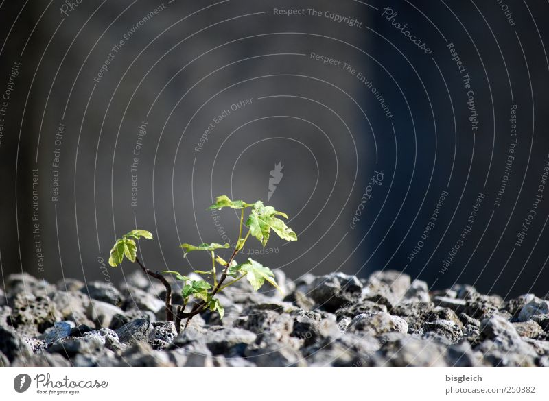 Nature Green Plant Leaf Life Environment Gray Stone Power Energy Growth Hope Longing Brave Passion Positive