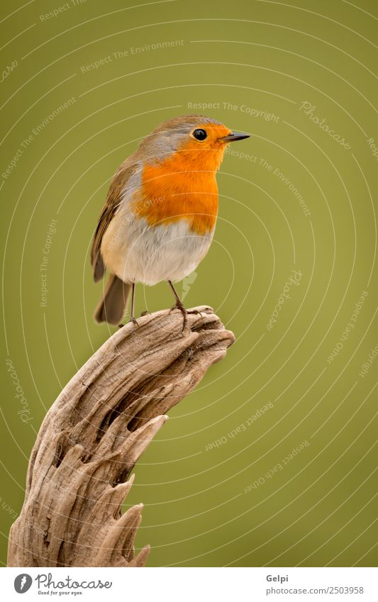 Pretty bird Nature Man Beautiful White Animal Adults Life Environment Natural Small Bird Brown Wild Europe Feather Spain