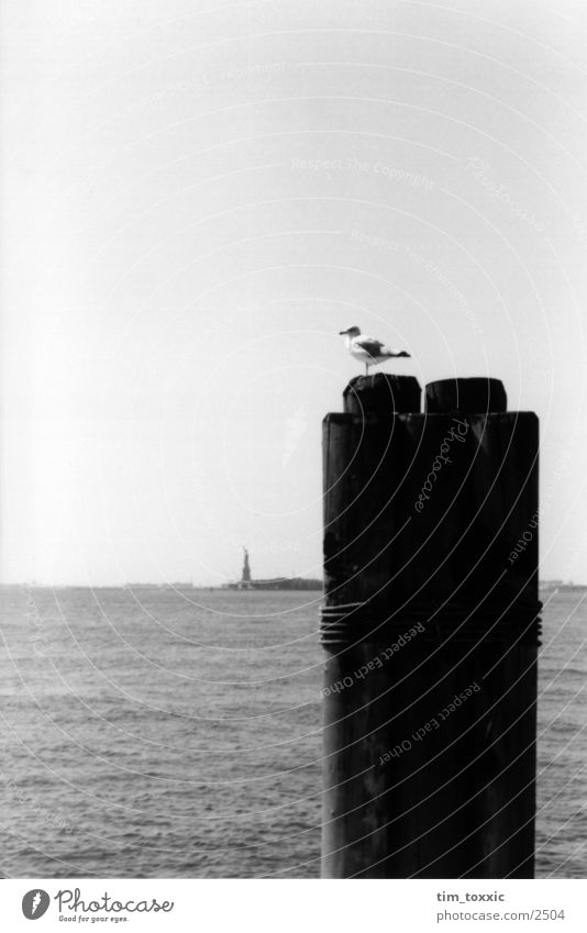 new_york.00 New York City Manhattan Bird Pigeon USA Water Sky Bollard Black & white photo Atlantic Ocean Coast Bright background Isolated Image Jetty
