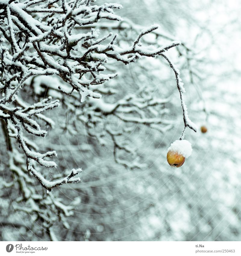 Blue White Yellow Bright Wait Apple To hold on Freeze Hang Plant