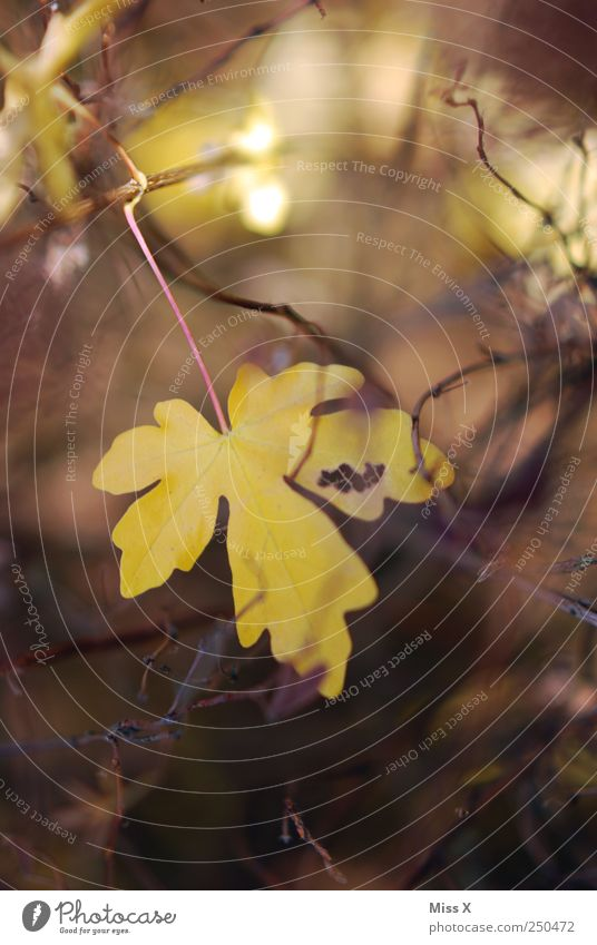 Leaf Yellow Autumn Bushes Branch Twig Autumn leaves Autumnal Twigs and branches