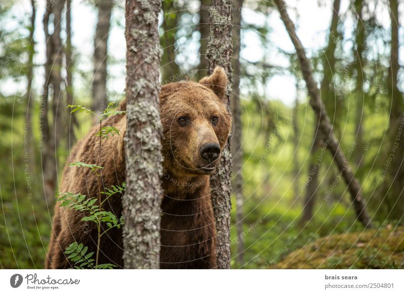 Brown Bear Vacation & Travel Adventure Science & Research Biologist Hunter Environment Nature Animal Earth Tree Forest Wild animal 1 Love of animals Fear