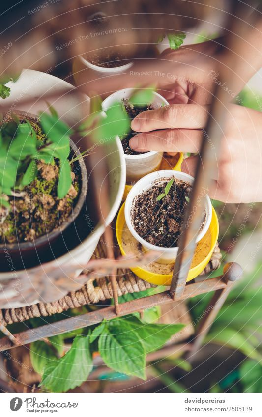 Woman hands planting seedlings in urban garden Human being Nature Plant Town Green Hand House (Residential Structure) Adults Life Natural Garden