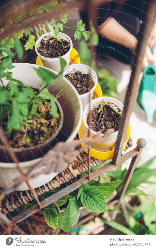 Young seedlings planted in a urban garden Vegetable Pot Leisure and hobbies House (Residential Structure) Garden Work and employment Gardening Human being Woman