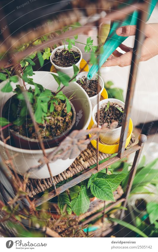 Woman hands watering seedlings in urban garden Vegetable Pot Leisure and hobbies House (Residential Structure) Garden Work and employment Gardening Human being