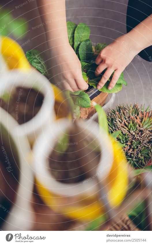 Woman hands gardening in a urban orchard Vegetable Pot Life Leisure and hobbies House (Residential Structure) Garden Work and employment Gardening Human being