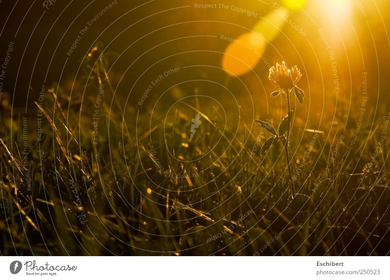 Nature Plant Sun Calm Relaxation Autumn Meadow Freedom Landscape Grass Happy Contentment Power Earth Glittering Transience