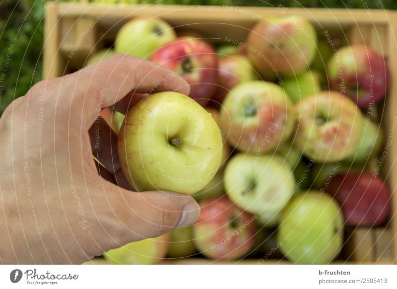 Fresh apples Food Fruit Organic produce Hand Fingers Box Wood Select To hold on Healthy Leisure and hobbies Joy Apple Apple harvest Harvest Pick