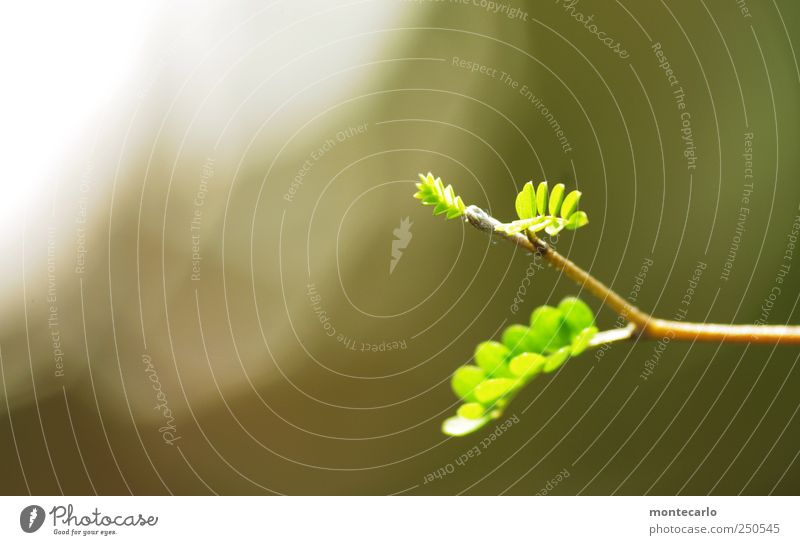 Nature Green White Beautiful Plant Leaf Environment Gray Park Elegant Esthetic Bushes Exceptional Soft Beautiful weather Exotic