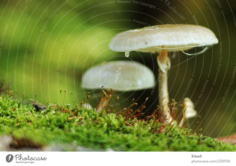 Forest mushrooms I Nature Mushroom Moss Brown Green Red White Colour photo Exterior shot Deserted Day Light Shallow depth of field