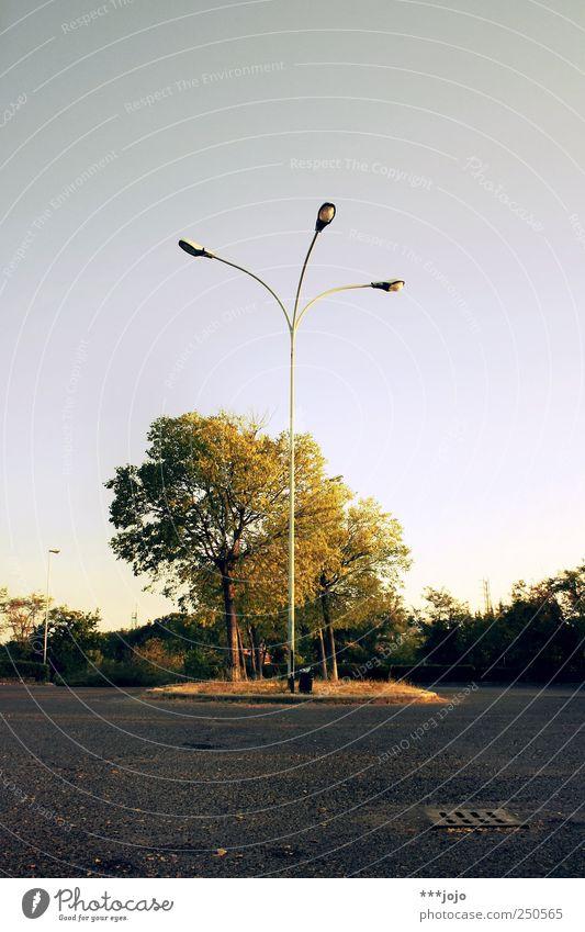 the origin of symmetry. Parking lot Calm Lantern Lamp post Street lighting Resting place Deserted Empty Dawn Gold Symmetry Lighting Lighting element Tree