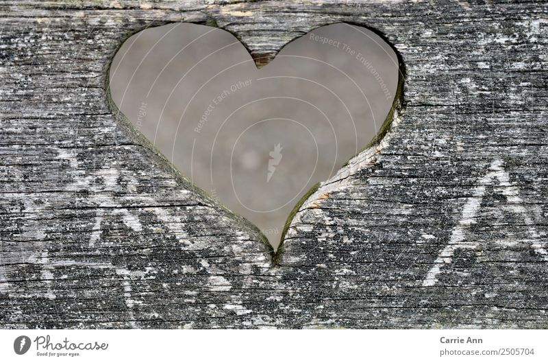 View through the heart Environment Wood Heart Observe Love Looking Dream Sadness Beautiful Natural Gray White Emotions Happy Safety (feeling of) Friendship